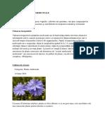 Culturi de Plante Medicinale
