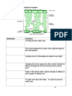 Lesson 5 Structure and Functions of Leaves Student Worksheet