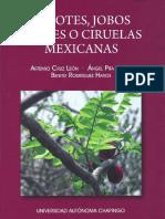 Botanica de Spondias L. Anacardiaceae