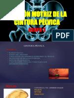 FUNCIÓN MOTRIZ DE LA CINTURA PÉLVICA.pptx