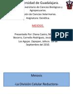 Meiosis Genetic A)