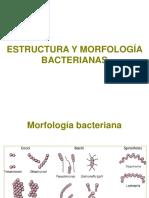 Estructura y morfologia bacteriana