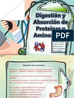 digestion y absorcion de proteinas