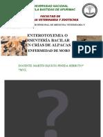 3. Enterotoxemia en alpacas.pdf
