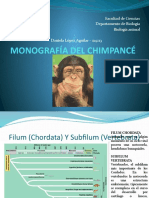 FILOGENIA DEL CHIMPANCÉ