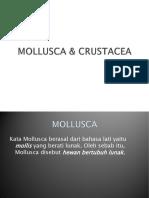 molusca & crustacea