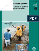 Farming Freshwater Prawn