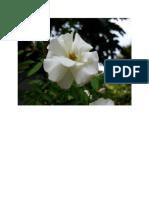 bunga 2