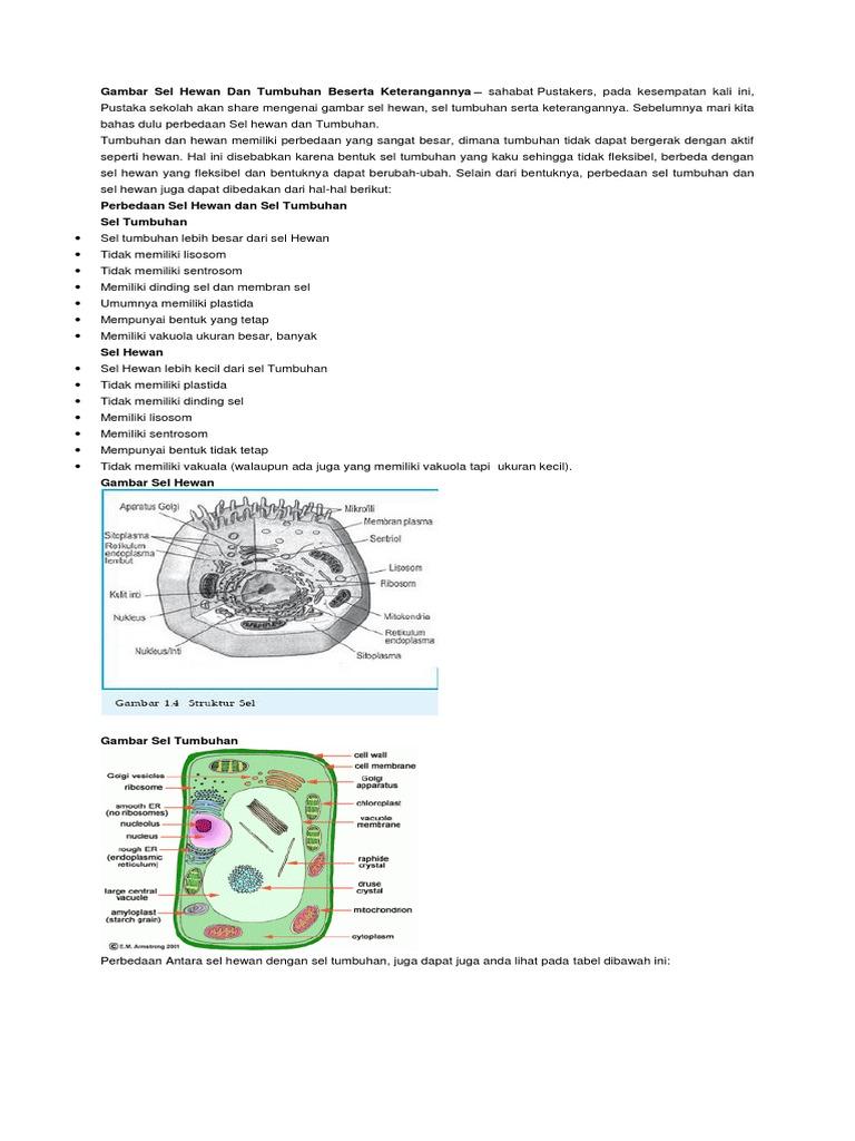 660 Koleksi Gambar Sel Hewan Dan Tumbuhan Beserta Keterangannya Dalam Bahasa Indonesia HD