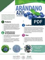 Arandano Monograf A