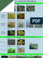 Poster Wasserpflanzen A3 20080129