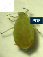 Mortality response of wheat aphid (Rhopalosiphum padi) against most commonly used insecticides in Pakistan-IJB