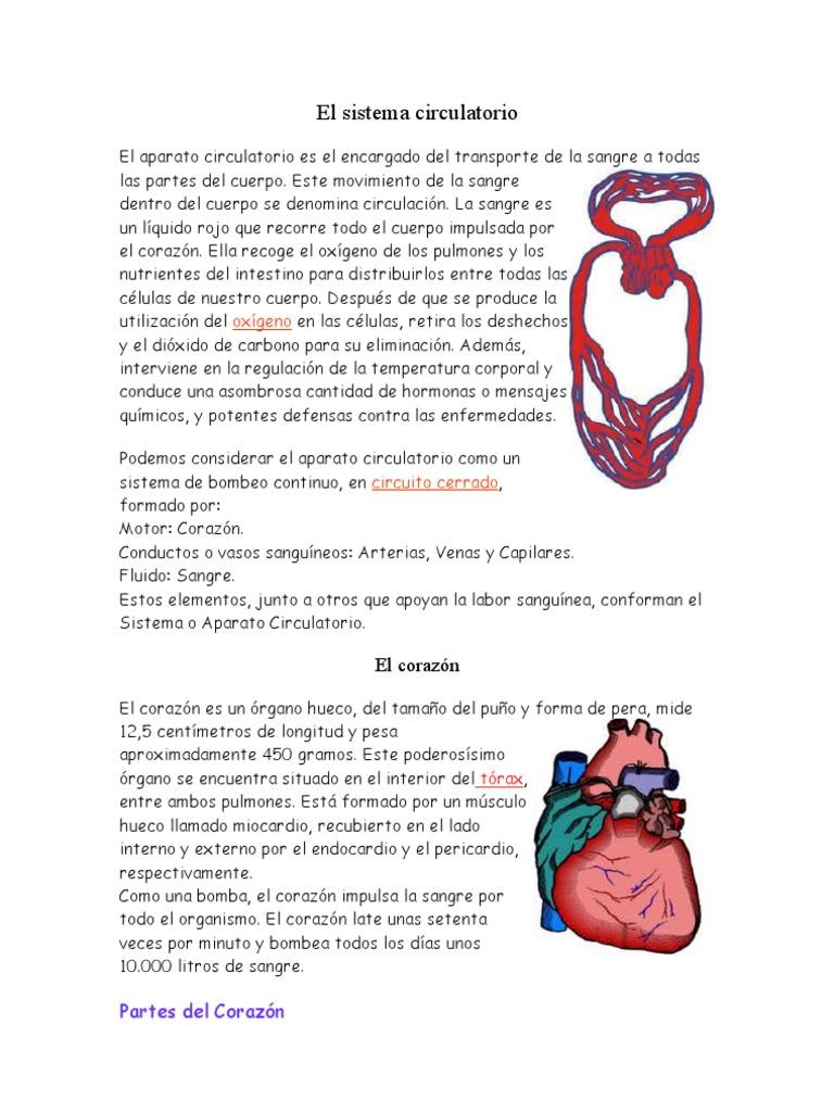 Circuito Sanguineo : El sistema circulatorio