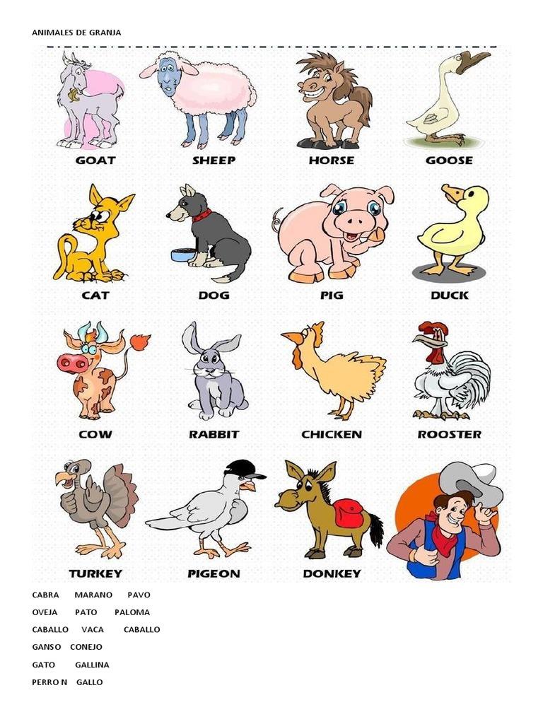Animales De Granja En Ingles Etnobiología Domesticación