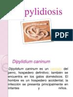 dipylidiosis-111117230821-phpapp02 (1)