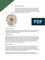 Biologi Pengertian Eukariotik