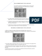 Desarrollo Embrionario y Fetal Humano