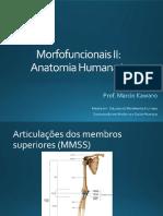 Articulação membros superiores.pdf