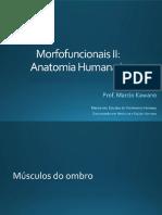 Sistema Muscular - músculos do ombro.pdf