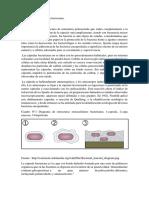 Biosíntesis de La Capsula Bacteriana
