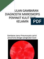 Kumpulan Gambaran Diagnostik Mikroskopis Penyakit Kulit Dan Kelamin