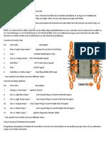 Probar Modulo DIS y Sensor Cigüeñal Ford 2.3