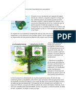 Importancia de La Fotosíntesis en Las Plantas