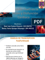 La Familia FoxO en La Función y Disfunción Cardiaca (DIAPO)