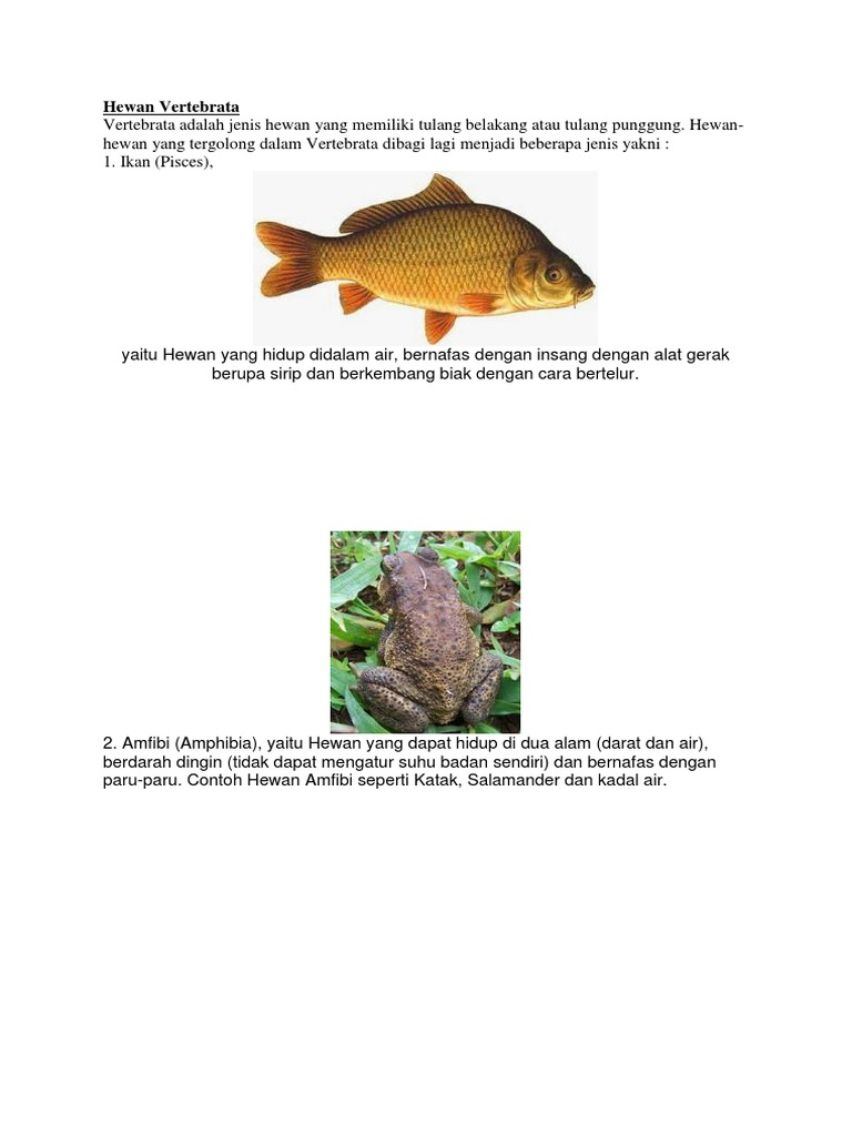 7800 Koleksi Gambar Hewan Vertebrata Ikan Gratis Terbaik