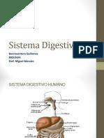 Presentacin Del Sistema Digestivo 111