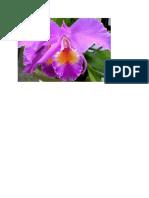 bunga 11