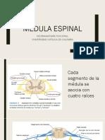 T7 Médula espinal
