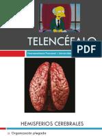 T10 - Telencéfalo.pdf