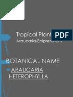 tropicals 7