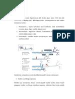 Klasifikasi Cedera Saraf Perifer