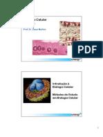 1_Aspec_Gerais_Celulas
