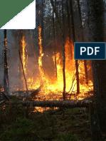 Bränder bra för skogen