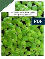 Duckweed- a tiny aquatic plant with growing potential- Studenten Universiteit van Utrecht -2015.pdf