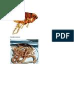 Parásitos externos.docx