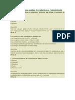 Preguntas y Respuestas Metabolismo Fotosíntesis