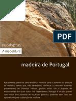 Eucalipto Madeidura - madeira de Portugal