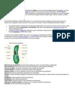 Phylum Ciliata