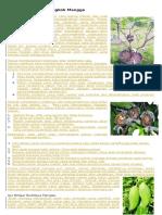 belajar-cara-mencangkok-mangga.pdf