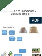 Semiología de La Orofaringe y Glándulas Salivales