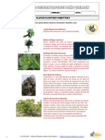 listadeplantaseervascomestveis-130118071948-phpapp02