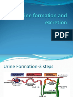 Urine Formation and Excretion