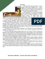 Bucătări1.docx