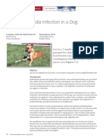 Recurrent Giardia Infection.pdf
