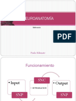 1era clase  neuroanatomía