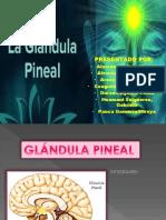 Exposicion Pineal